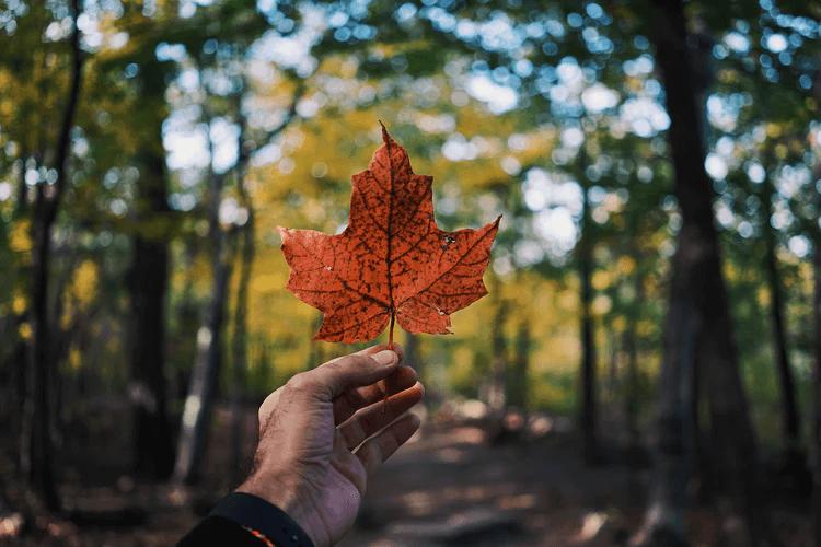 فرهنگ کانادایی