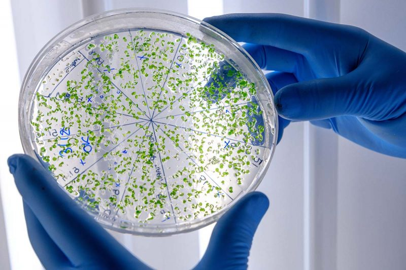 میکروب شناسان و زیست شناسان سلولی و مولکولی