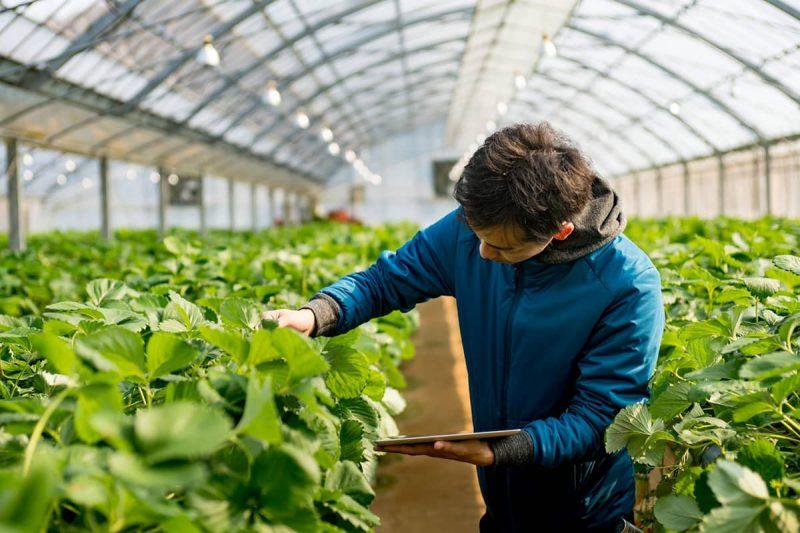 گرایش های رشته مهندسی کشاورزی در خارج از کشور