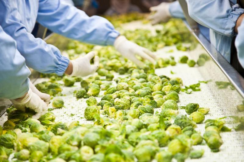 بازار کار رشته صنایع غذایی در خارج از کشور
